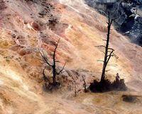 Wyoming Yellowstone Mammoth Hot Springs - 090-800